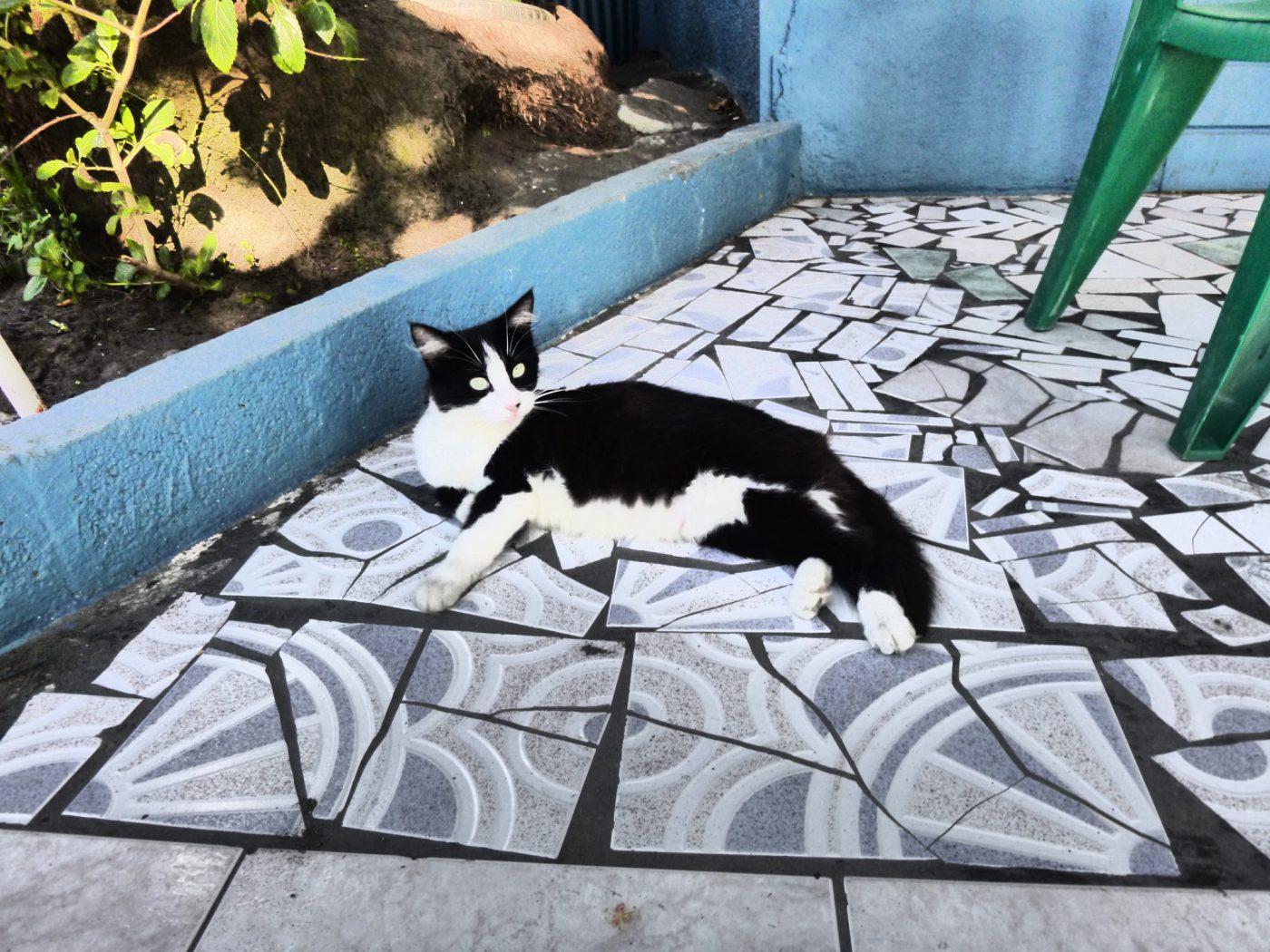 kitty guadeloupe